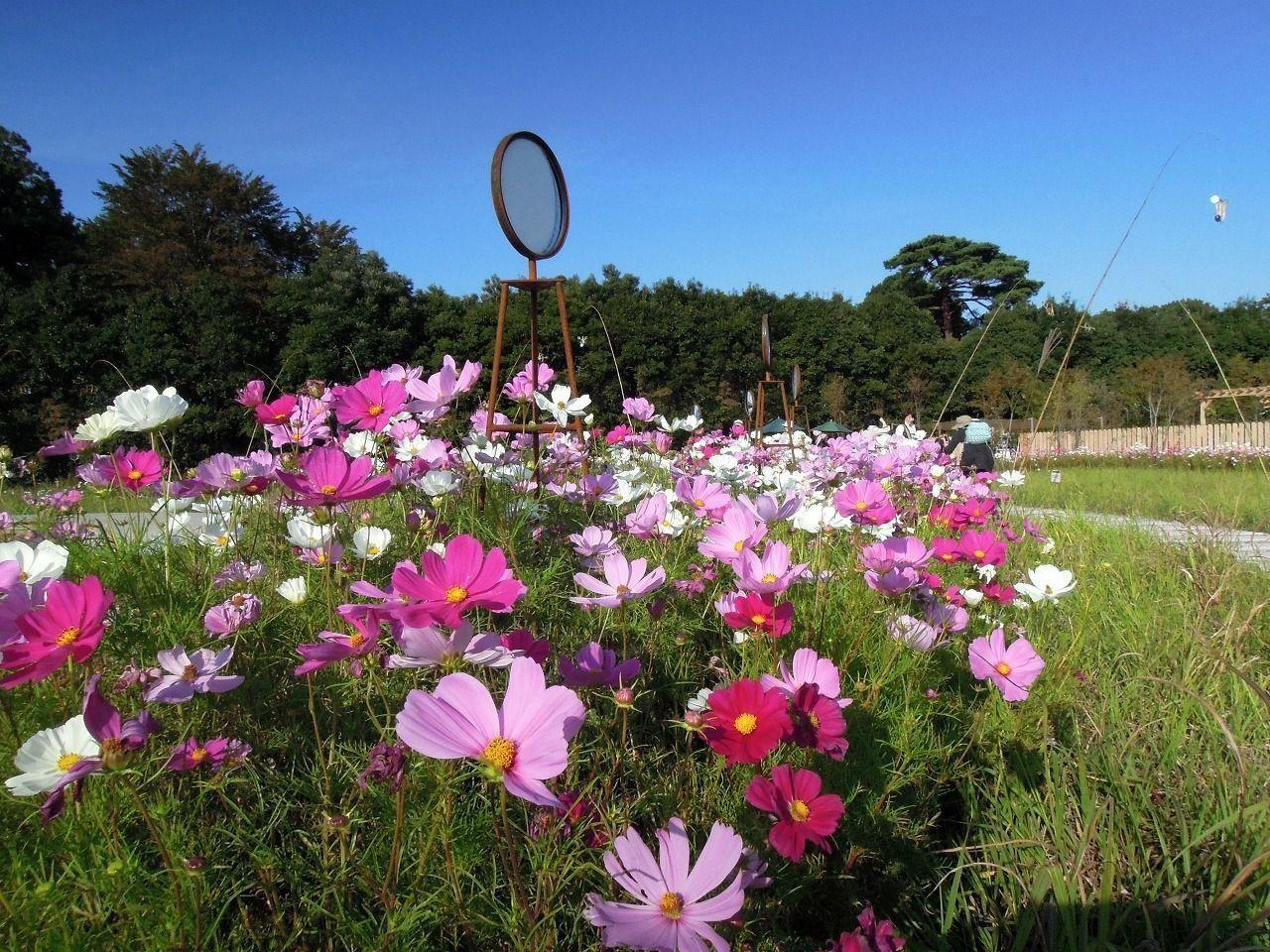 畑だけじゃない。植物もたくさんあります。調布に行けば神代植物公園もあるくらい。
